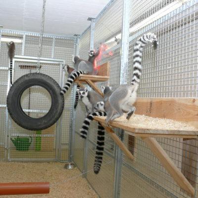 Affengehege von innen Wildtierstation Sachsenhagen