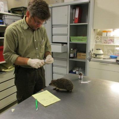 Dr. Brandes bei der Behandlung Wildtierstation Sachsenhagen