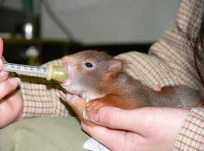 Fuetterung Eichhörnchen