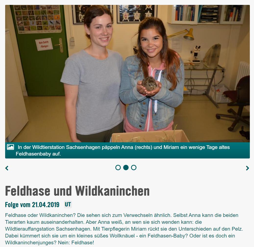 KiKA - Feldhase und Wildkaninchen