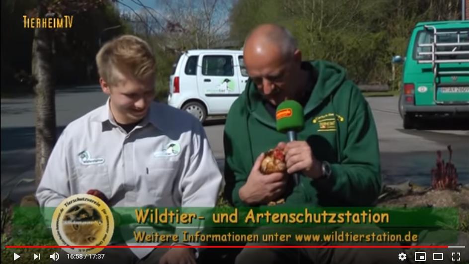 Wildtier- und Artenschutzstation Sachsenhagen-TierheimTV