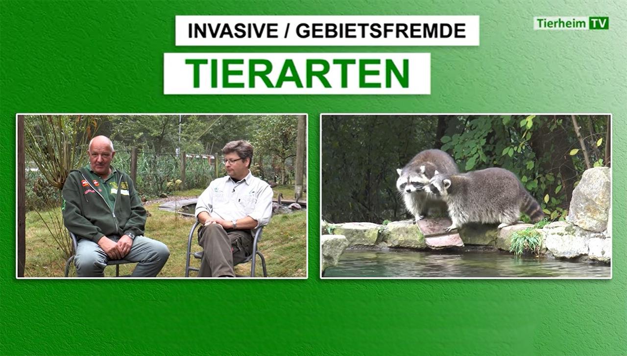 01.09.2017: Tierheim TV - Invasive / Gebietsfremde Tierarten